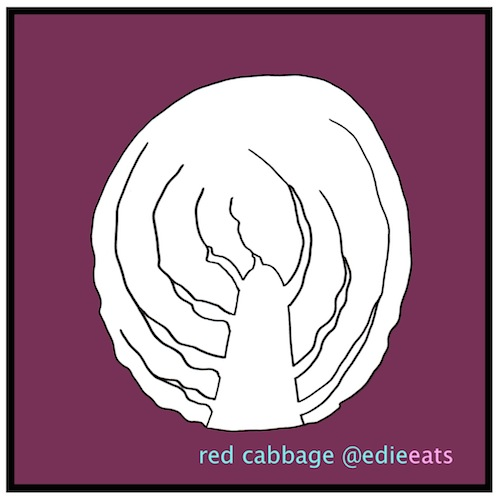 red cabbage illustration and recipe by Edie eats food blog- Edith Dourleijn